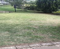 artificial turf front lawn before