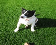 All of our customers and their dogs love their new Luxe Turf lawn.