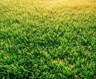 Landscape Close Up HS